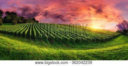 Sunrises And Sunsets Vineyard Fields Grass. Best Sunrises Nature Image.sunrise And Sunset.
