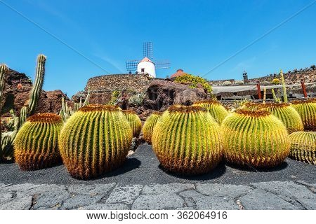 Beautiful View Of Tropical Cactus Garden (jardin De Cactus) In Guatiza Village. Lanzarote, Canary Is