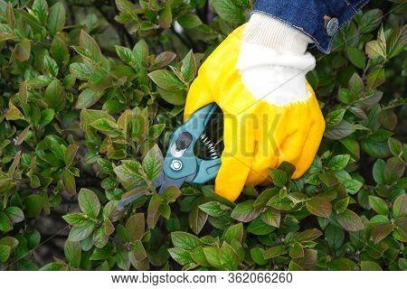 Shrub Care Background. Gardener Hand In Glove Holding Garden Pruner.
