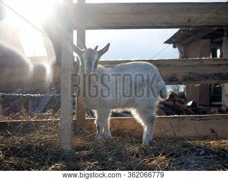 Kid On The Farm In The Sun