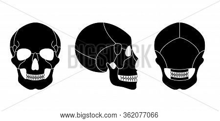 Human Skull Anatomy. Flat Vector Medical Illustration Isolated. Structure Of Facial Skeleton With Ma