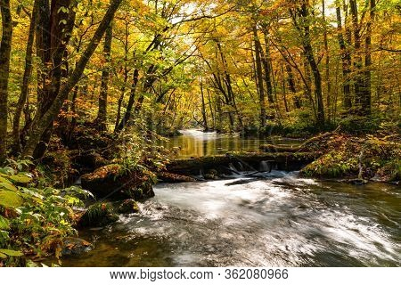 Beautiful Scenic View Of Oirase Mountain Stream Flow In The Colorful Autumn Foliage Forest At Oirase