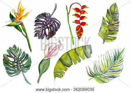 Set Of Tropical Flowers And Leaves. Heliconia, Calla, Strelitzia, Banana, Monstera, Palm, Calla. Iso