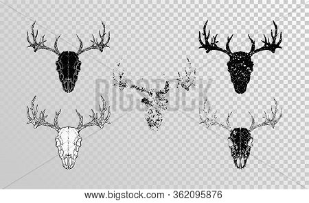 Vector Set Of Hand Drawn Skulls Deer With Grunge Elements In Different Versions On A Transparent Bac