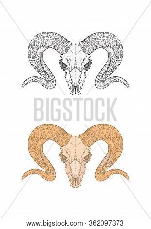 Vector Illustration With Hand Drawn Wild Ram Skull. Two Variants: Monochrome And Colored. In Realist