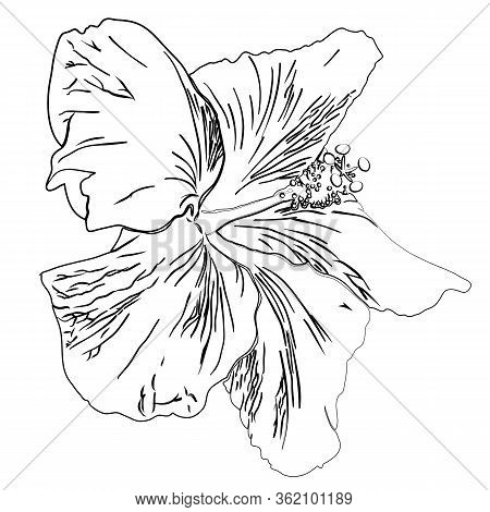 Flower Of Hibiscus. Black Outline Silhouette Isolated On White Background. Good Design Element For G