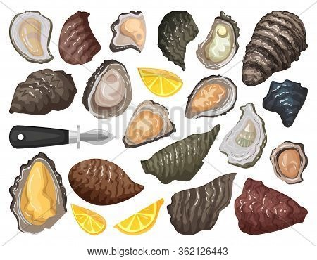 Oyster Isolated Cartoon Set Icon. Vector Cartoon Set Icon Shellfish Food. Vector Illustration Oyster