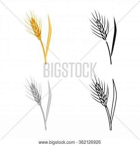 Vector Design Of Barley And Sheaf Symbol. Collection Of Barley And Crop Vector Icon For Stock.