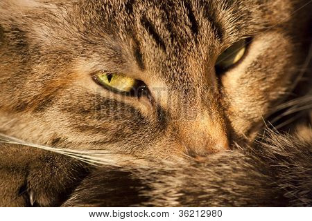 Lying Cat Background