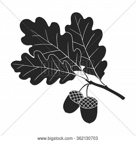 Acorn Vector Icon.black Vector Icon Isolated On White Background Acorn .