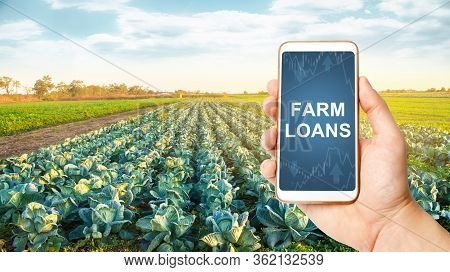 Farmer Holds A Phone With Farm Loans On Background Of A Cabbage Plantation. Subsidies Financial Supp