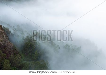 Trees With Cloudy Mist, Kelimutu, Flores Island, Indonesia