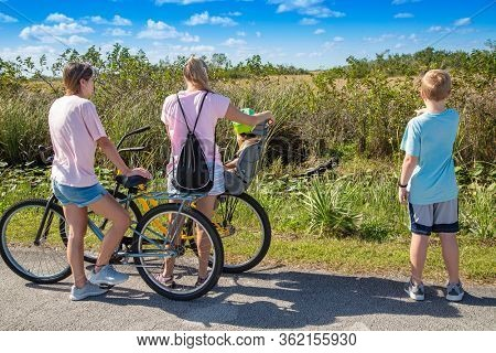 Family looking at an Alligator in the Florida Everglades National Park. Cute family on bicycles stopping and looking at a wild alligator. Family Adventure in out in nature