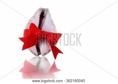 A Seashell In The Shape Of A Vagina Tied With A Red Bow. The Concept Of Female Health And Beauty.
