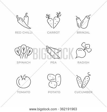 Set Line Icons Of Vegetables Isolated On White. Red Chilli, Carrot, Brinjal Or Eggplant, Spinach, Pe