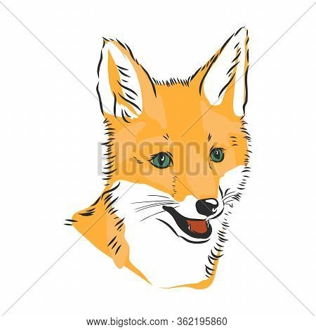 Fox Portrait. Hand Drawn Vector Illustration. Can Be Used Separately From Your Design. Portrait Of A