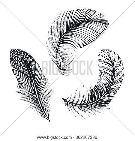 Vector Collection Of Three Natural Bird Feathers. Hand Drawn Vector Illustration