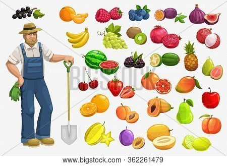 Fruits, Berries And Farmer, Vector Food Of Gardening And Farming. Apple, Strawberry, Orange And Cher