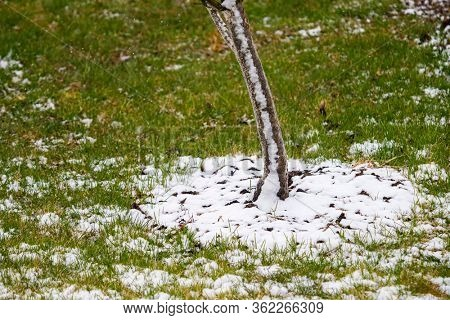 The first snow on the green grass in the garden