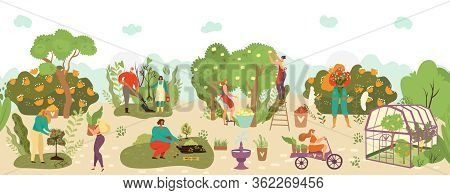 Harvest In Garden With Fruits Crop And Agriculture Farming Flat Vector Illustration, Harvesters Frui