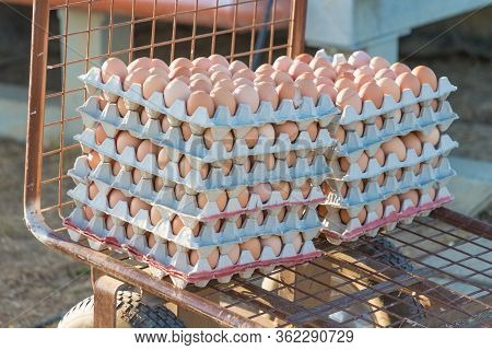 Range Of Brown Fresh Eggs At Bio Poultry Farm Wheelbarrow. Raw Egg In Rows At Rural Agriculture Whee