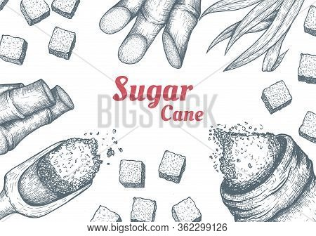 Collection Of Sugarcane: Cane Sugar And Sugarcane Top View Frame. Vector Hand Drawn Engraved Set Ill