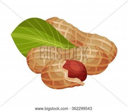 Peanut Kernel In Nutshell With Green Leaf Vector Illustration