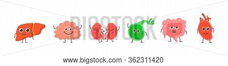 Human Internal Organs. Biology Medicine Character Cartoon. Heart, Liver, Brain, Stomach, Lungs, Kidn