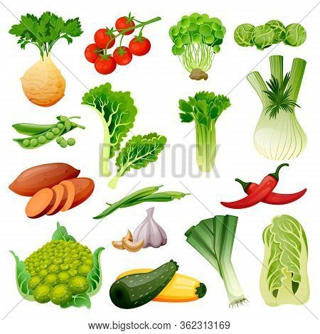 Farm Fresh Vegetables Set. Vector Flat Cartoon Illustration. Isolated Celery, Tomato, Brussels Cabba