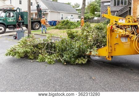 Fairhaven, Massachusetts, Usa - August 13, 2018: Oak Tree Branches Ready To Be Run Through Wood Chip