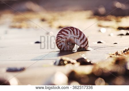 Great British summer  beach with nautilus pompilius sea shell