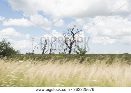 Summer Landscape From The Road, Spikes, Leafless Trees And Sky With Clouds. Entre Rios, Argentina.