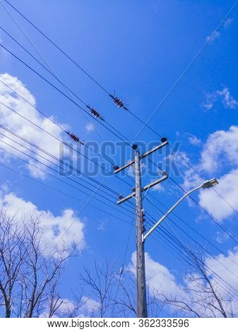 Wooden Electrical Transmission Pole With Streetlight And Power Lines Above Tree Branches Against Sky