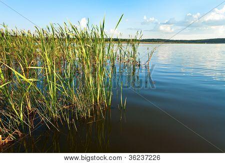 Summer Rushy Lake