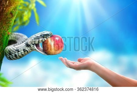 Snake In Paradise Giving An Apple Fruit To A Woman. Forbidden Fruit Concept.