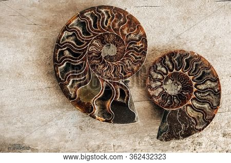Ammonites Fossil Shell On Wooden Background. Top View. Copy, Empty Space For Text. Polished Half Of