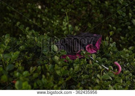 Forgotten Or Broken Pink Umbrella In Green Bushes. Autumn, Spring. The Umbrella Protects From Rain,