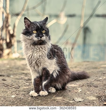 Homeless Street Cat Close-up. Stock Photo Of A Stray Spotted Cat. Dirty Cat. The Concept Of Protecti
