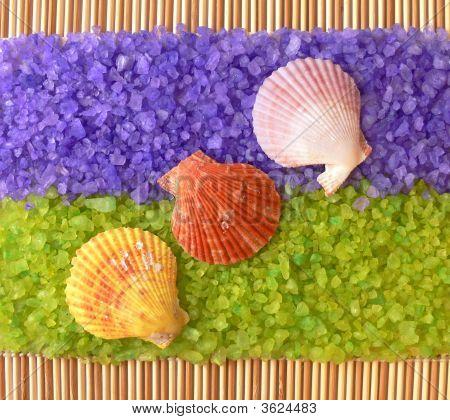 Sea Shells On Spa Salt