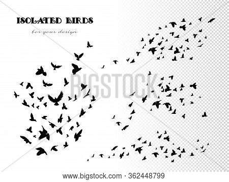 Flock Of Flying Birds. Vector Set Of Isolated Silhouettes Of Pigeons On White Background. Black Outl