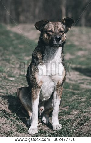 Sad Dog. Homeless Dog. A Sad Dog Is Sitting On The Ground. Dog In The Nature. Homeless Doggy With A