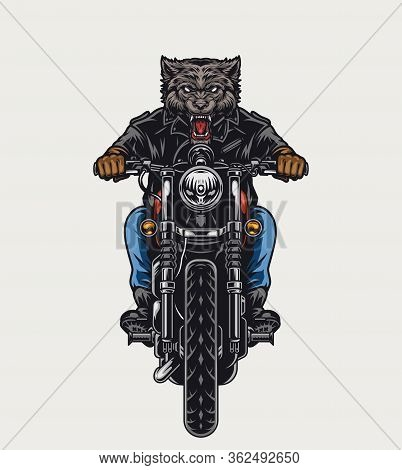 Ferocious Wolf Head Moto Rider Driving Motorcycle In Vintage Style Isolated Vector Illustration