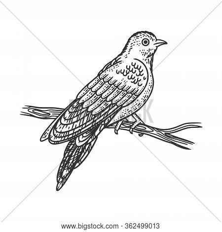 Cuckoo Bird Sketch Engraving Vector Illustration. T-shirt Apparel Print Design. Scratch Board Imitat