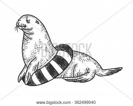 Seal Circus Animal With Life Buoy Sketch Engraving Vector Illustration. T-shirt Apparel Print Design