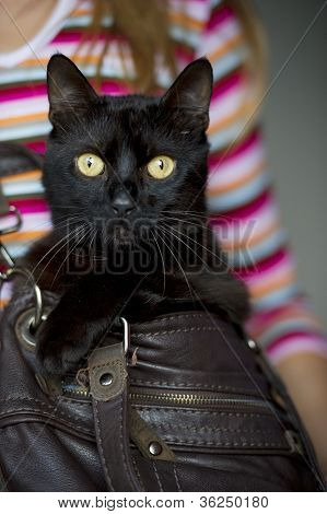 The Black Cat's Attention