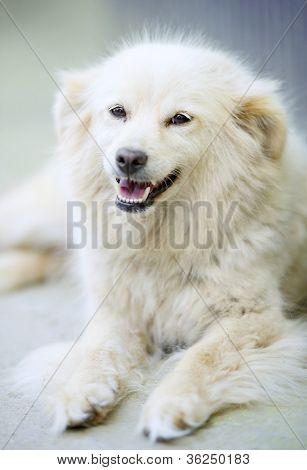 White Dog Look