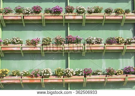 Vertical Wall Garden Full Of Flower Boxes Or Clay Planters. Rows Hanging Over Green Wall