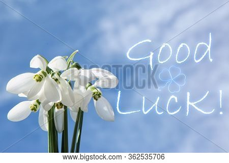 Bouquet Of Beautiful Snowdrops And Phrase Good Luck Against Blue Sky