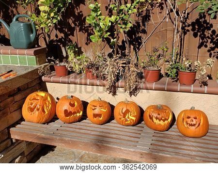 Row of carved halloween pumpkins on bench in sunlight.