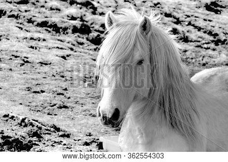 White Horse. White Horse. White Horse. White Horse.
